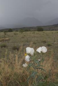 some sort of white flower