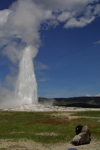 Old Faithful and Bison
