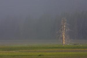 sunlit dead tree
